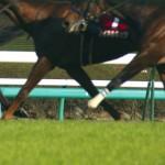 競馬予想における洋芝と野芝の活用法