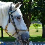 種牡馬データを見る時の注意点