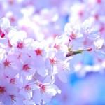 桜花賞で万馬券を狙う方法